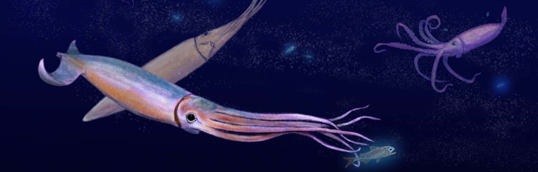 Science writing image squid